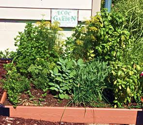 ECOC herb garden nxt to the sahe house